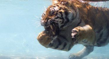TOP 20 des meilleures photos prises sous l'eau!