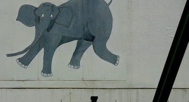 Tuffi, l'éléphant qui sauta du plus vieux monorail au monde