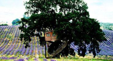 Dormir dans les arbres: le «Tree Hotel»