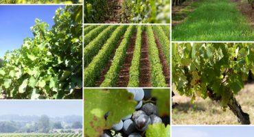 Boire du vin en Europe