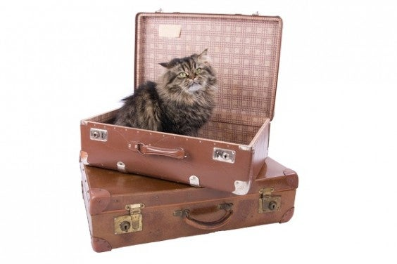 chat_valise-564x376