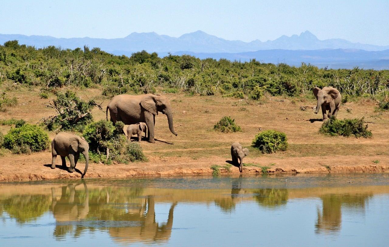 Afrique du Sud eDreams