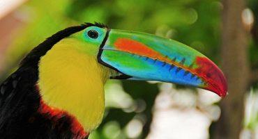 Des animaux du monde aux couleurs incroyables!