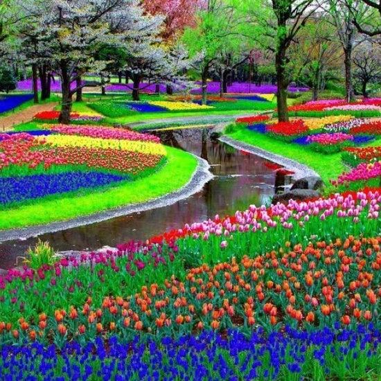 La plus belle coloration du monde