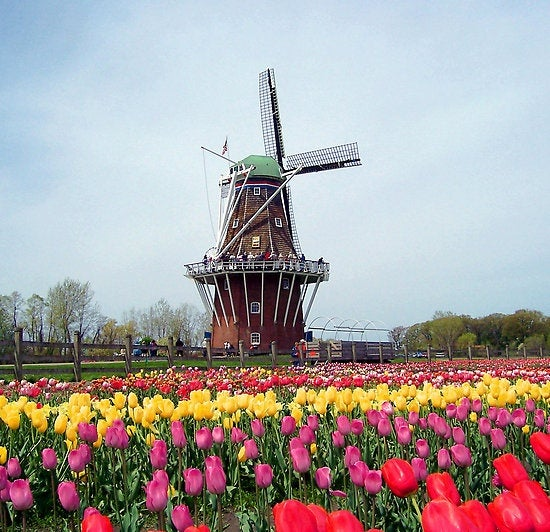 Keukenhof Gardens Near Amsterdam Famous Tulip And Flower