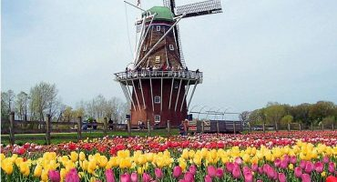Top 5 festivals de fleurs en Europe!