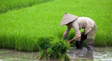 Voyage au Vietnam: les meilleures expériences capturées par Instagram