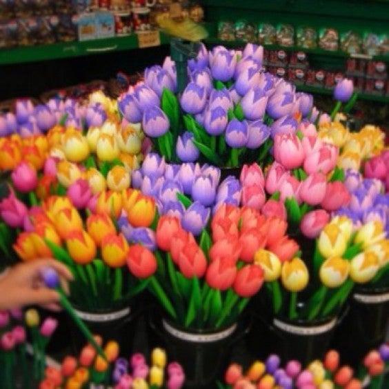 tulipes Amesterdão