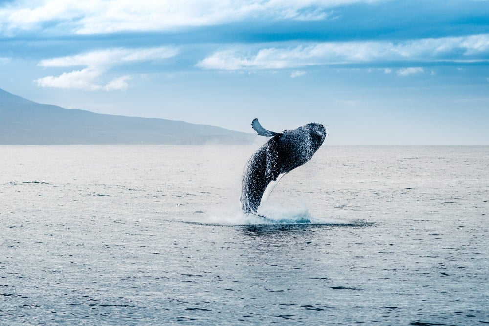 baleine islande - blog eDreams