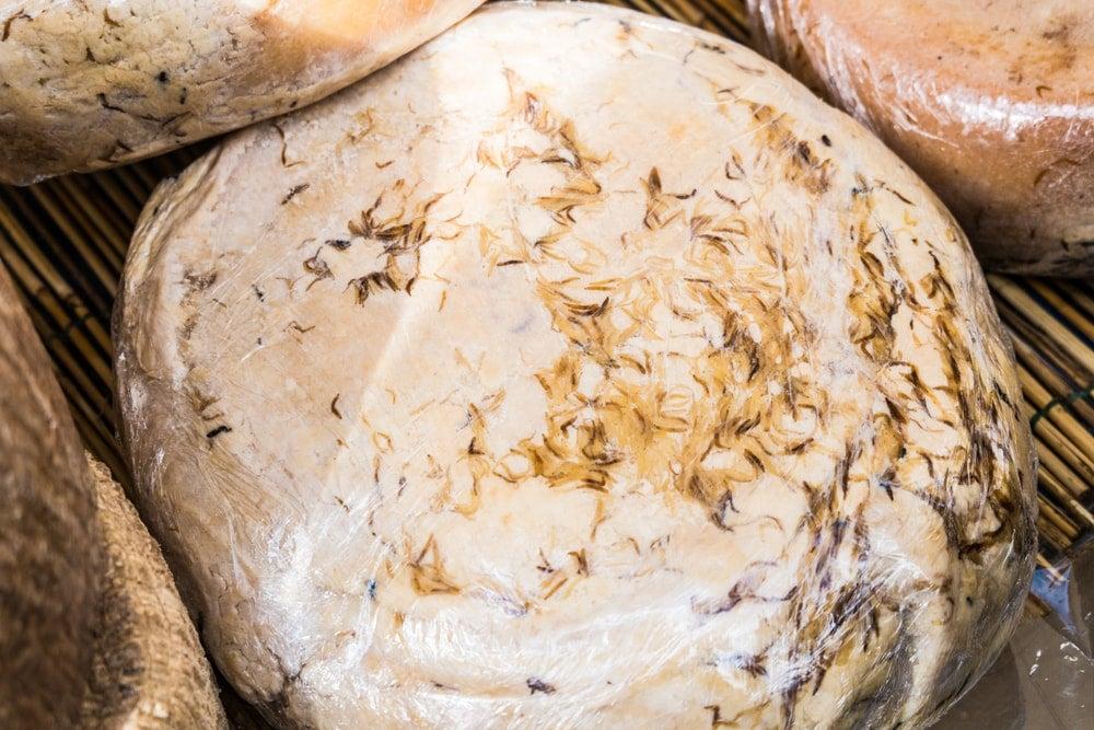 casu marzu fromage sarde - blog eDreams