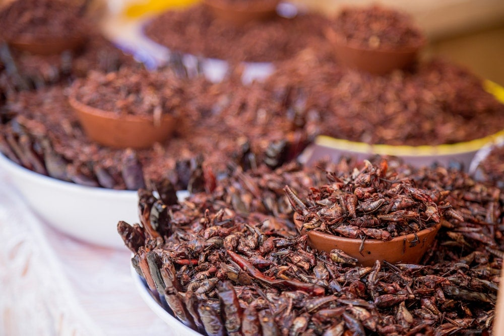 sauterelles frites - blog eDreams