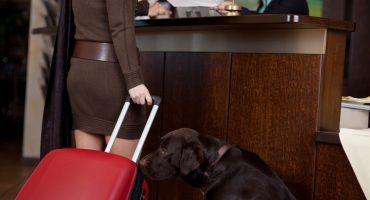 Voyager avec vos animaux: les règles selon les compagnies aériennes