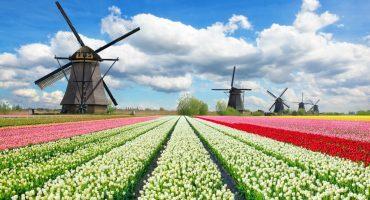 5 festivals pour célébrer l'arrivée du printemps en Europe