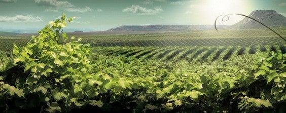 wine ex per la ruta del vi de lleida