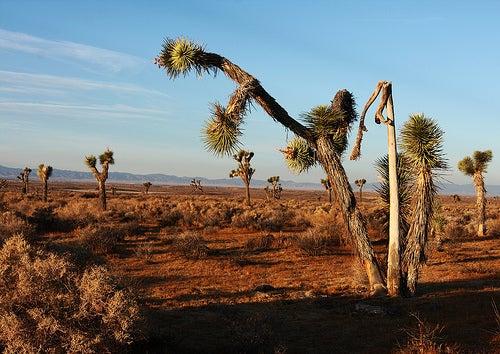 Désert de Mojave
