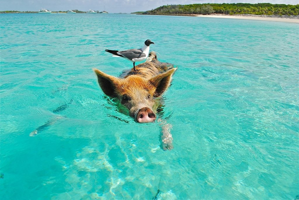 Bahamas eDreams