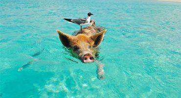 Explorez les plus belles îles des Caraïbes…