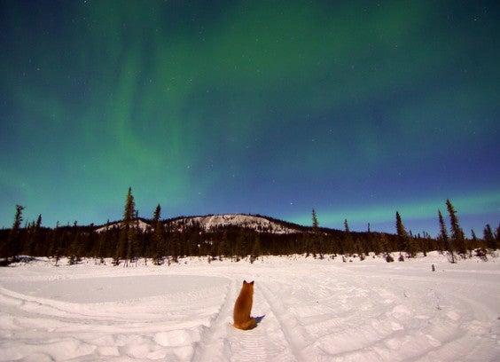 aurore boreale alaska