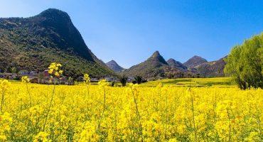 Les 20 plus beaux endroits du monde à voir au printemps