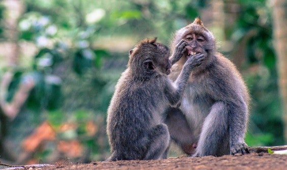 Bosque de monos en Ubud