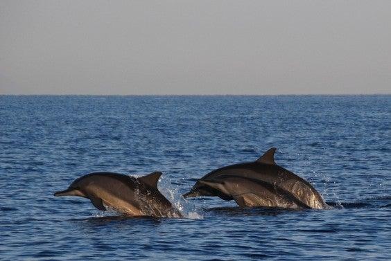 delfines en bali
