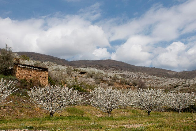 Valle del Jerte Extremadura Spagna