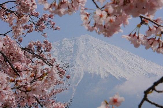 Mont Fuji au printemps