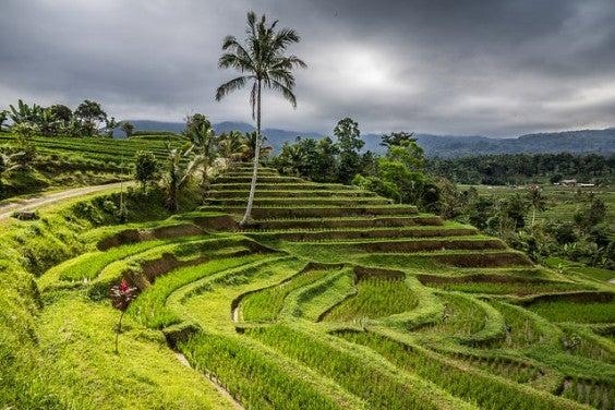 Terrazas de arroz de Jatiluwih Bali