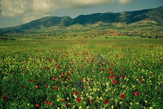 morocco spring