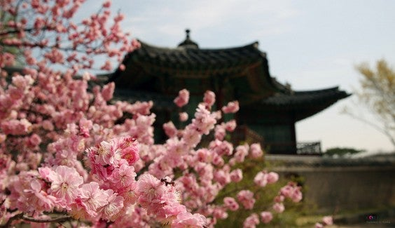 Seoul au printemps