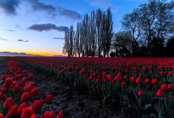 skagit valley USA