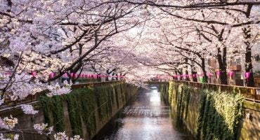Le guide indispensable du Hanami au Japon !