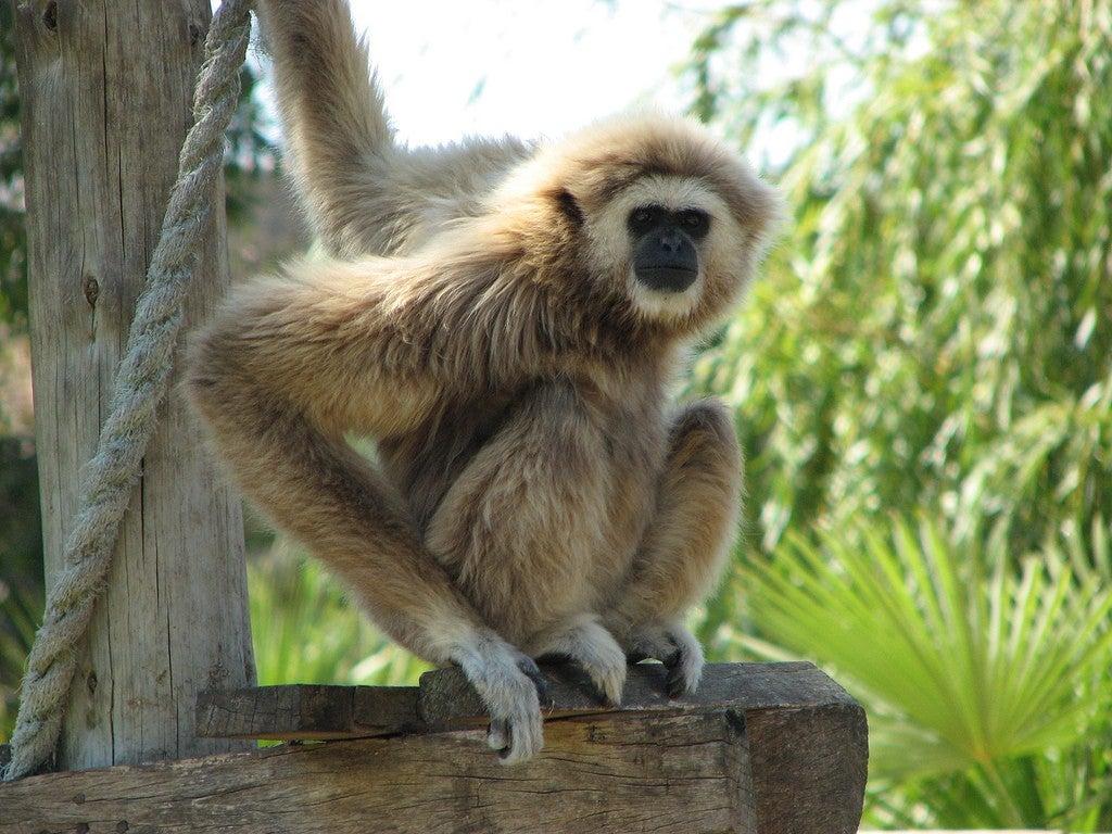 Zoo Lagos en portugal