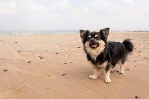Que faire de votre animal pendant vos vacances ?