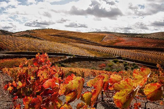 vignes Douro Portugal automne - blog eDreams