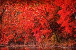 12 paysages qui vont vous faire aimer l'automne