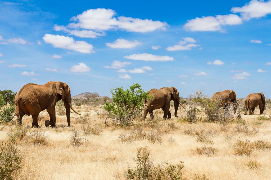 elephant kenya - blog eDreams - visiter l'Afrique