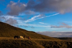 5 posts à lire avant de partir en Islande
