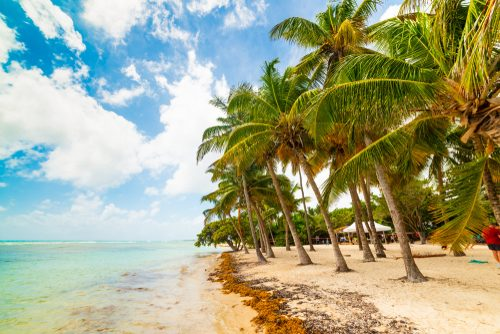 plage cocotiers guadeloupe - eDreams