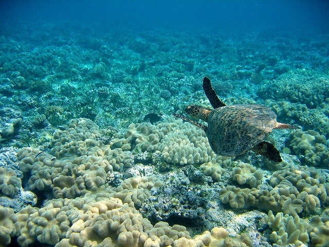 great bareer reef