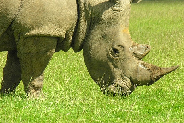 rhinoceros - blog eDreams - visiter l'Afrique