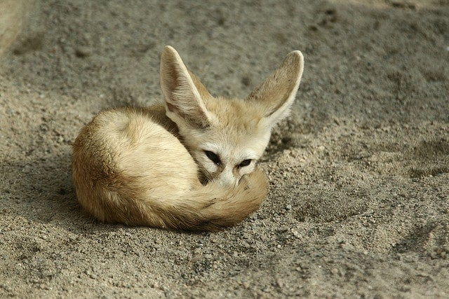 fennec - blog edreams