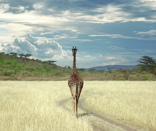 giraffe - blog edreams