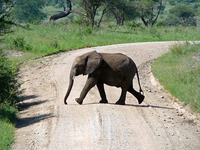 destination couple 2017 tanzanie edreams