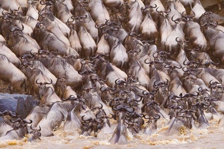 réserve de Masai Mara au Kenya - blog eDreams