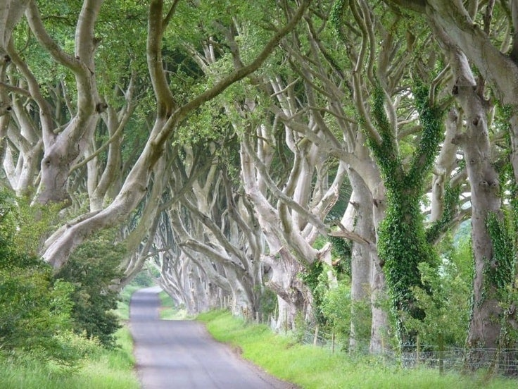 the Dark Hedges en Irlande du Nord - blog eDreams