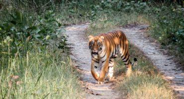 5 safaris incroyables dans le monde