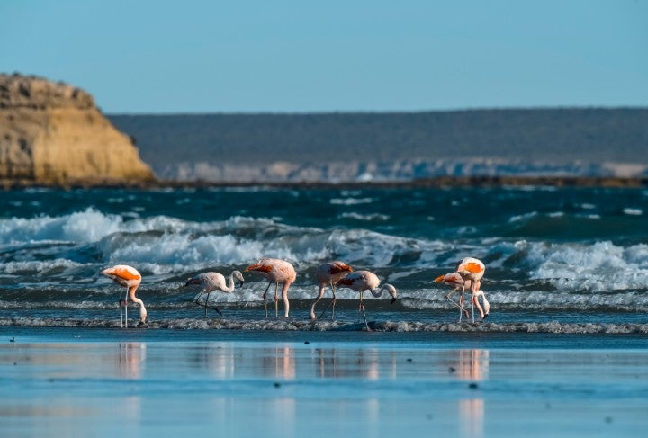 plage flamants roses valdes argentine - blog edreams