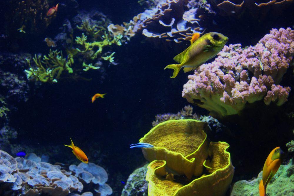 poissons aquarium la rochelle